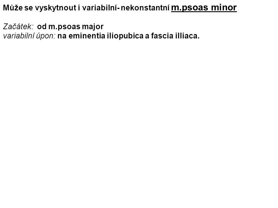 Může se vyskytnout i variabilní- nekonstantní m.psoas minor