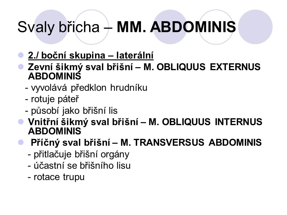 Svaly břicha – MM. ABDOMINIS