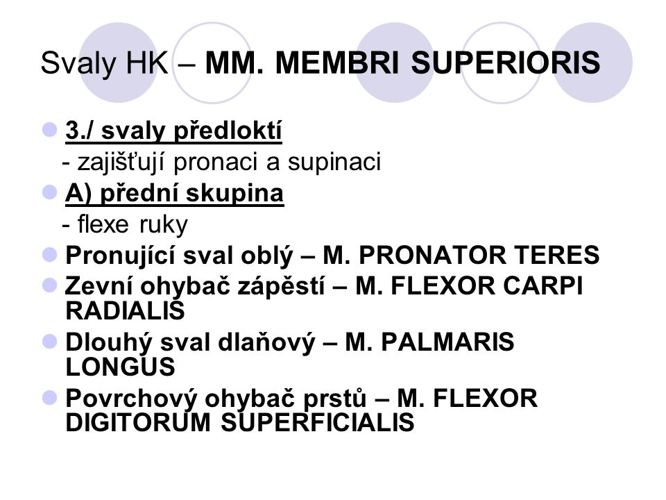 Svaly HK – MM. MEMBRI SUPERIORIS