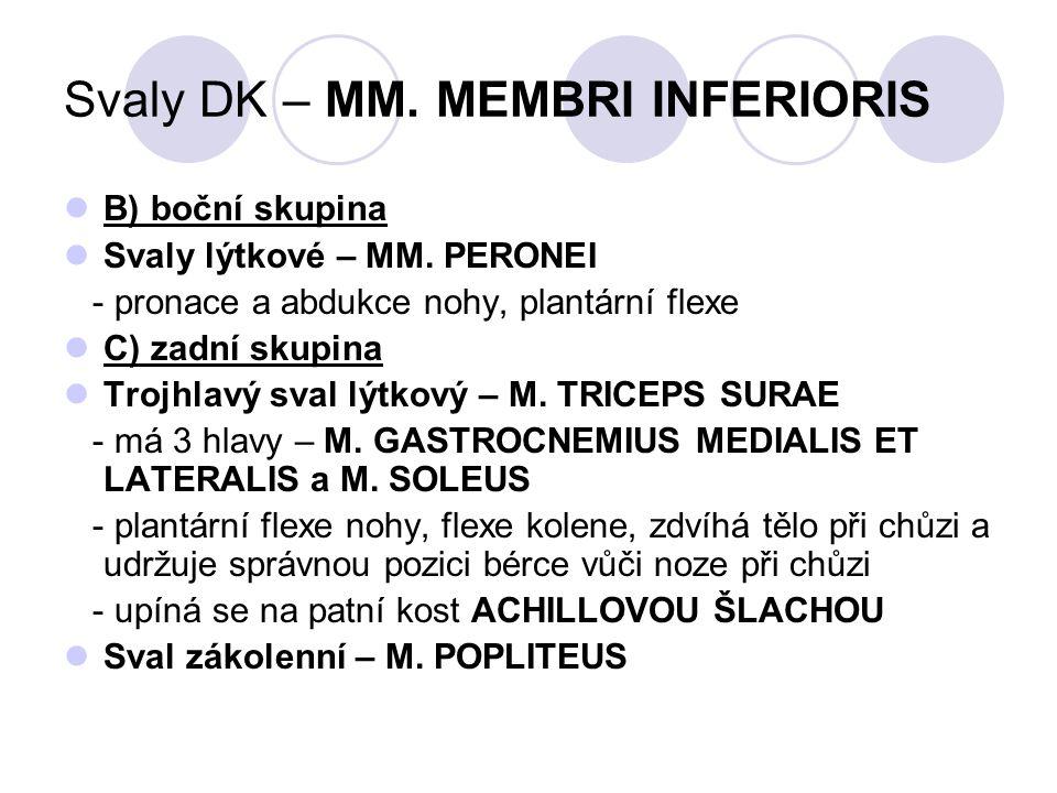 Svaly DK – MM. MEMBRI INFERIORIS