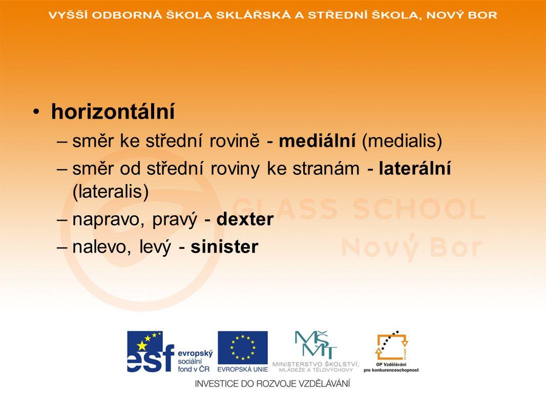horizontální směr ke střední rovině - mediální (medialis)