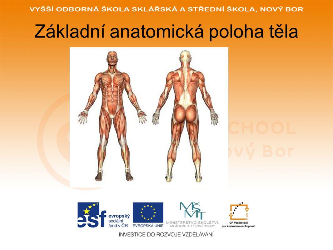 Základní anatomická poloha těla