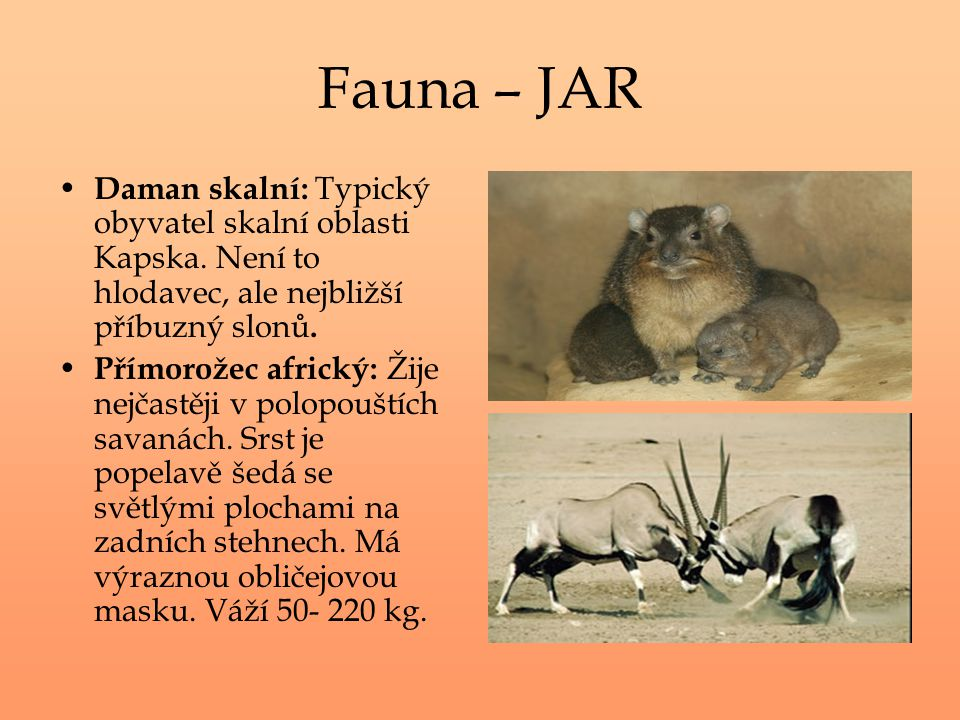 Fauna – JAR Daman skalní: Typický obyvatel skalní oblasti Kapska. Není to hlodavec, ale nejbližší příbuzný slonů.