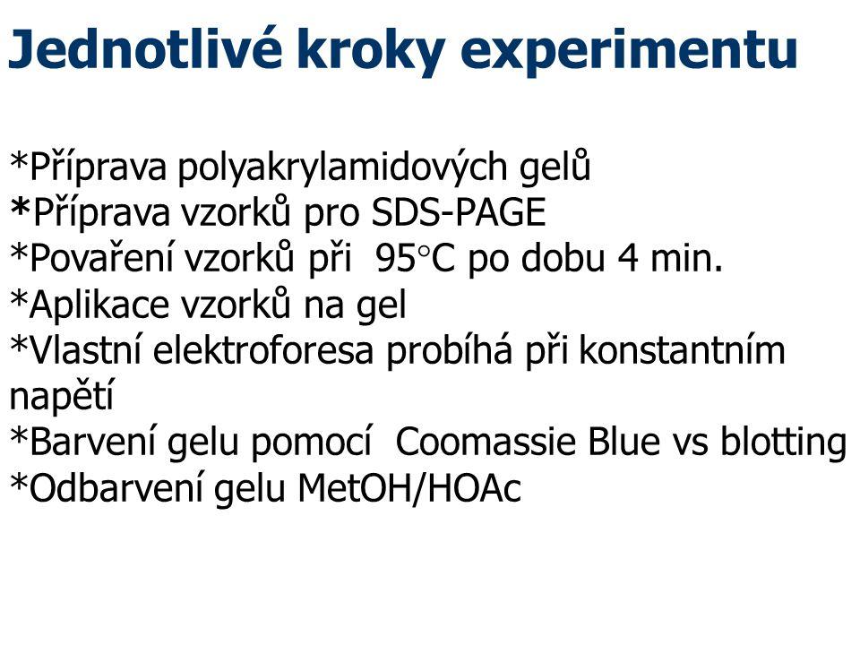 Jednotlivé kroky experimentu. Příprava polyakrylamidových gelů