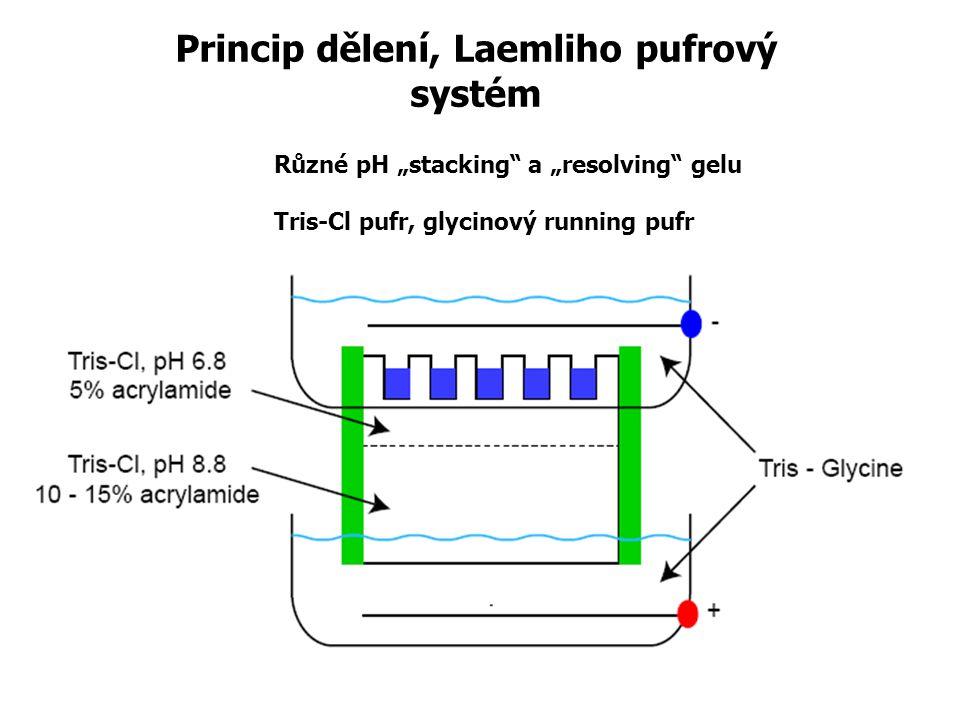 Princip dělení, Laemliho pufrový systém