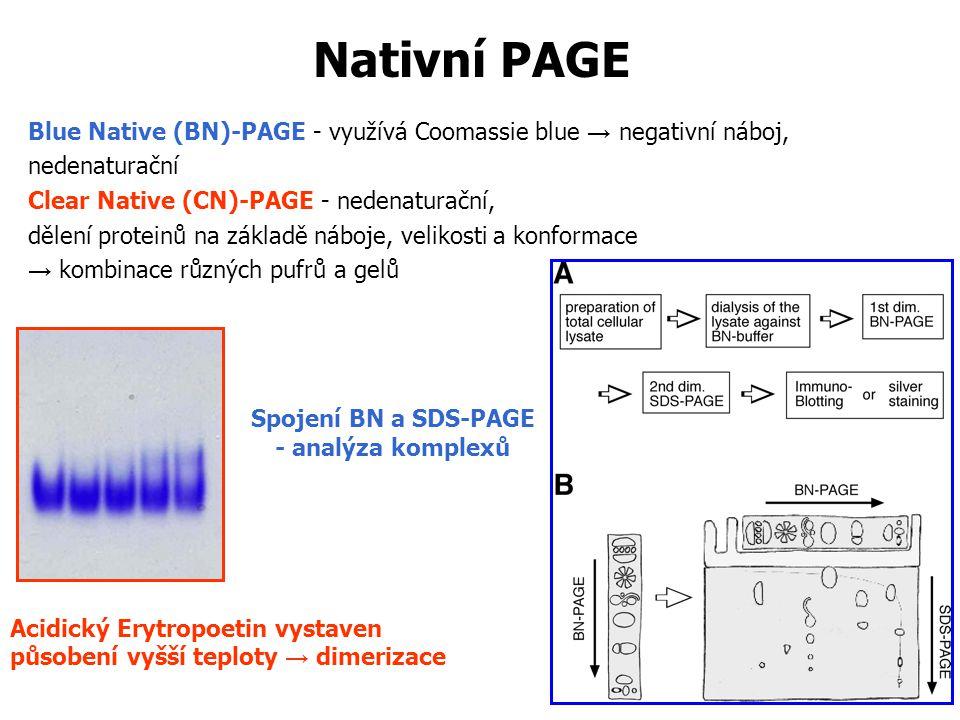 Nativní PAGE Blue Native (BN)-PAGE - využívá Coomassie blue → negativní náboj, nedenaturační. Clear Native (CN)-PAGE - nedenaturační,