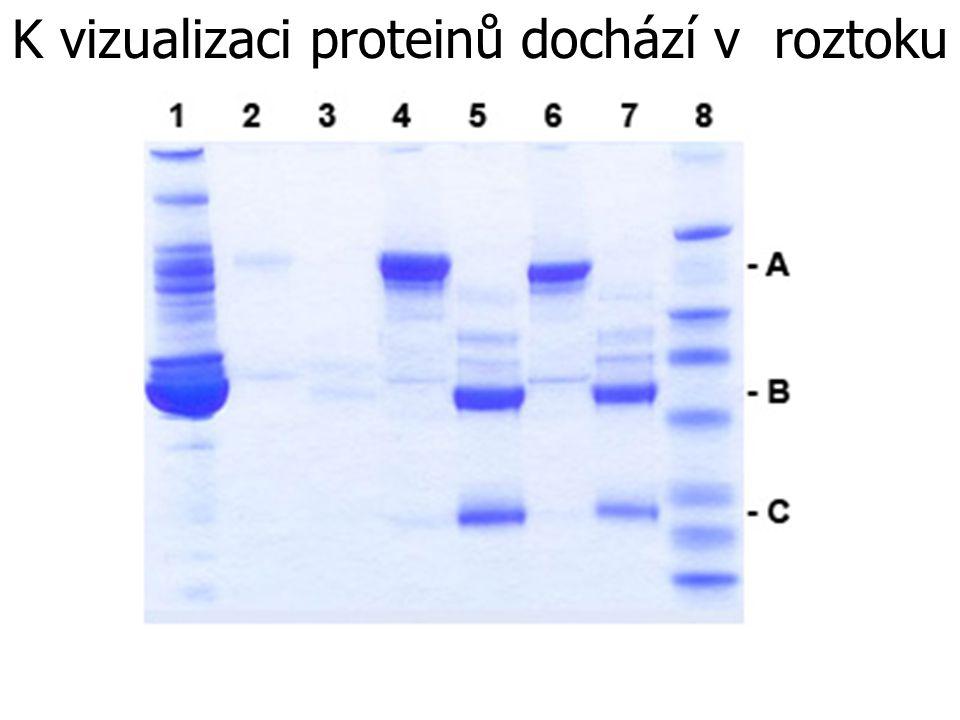 K vizualizaci proteinů dochází v roztoku Coomasie blue.
