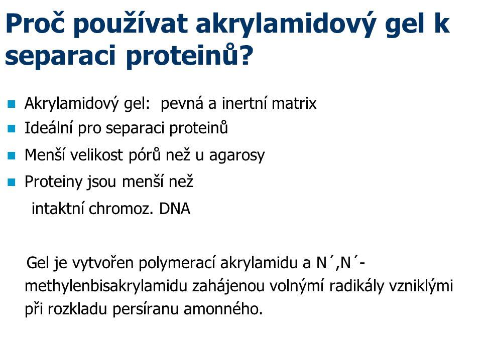 Proč používat akrylamidový gel k separaci proteinů