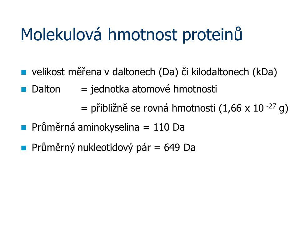 Molekulová hmotnost proteinů