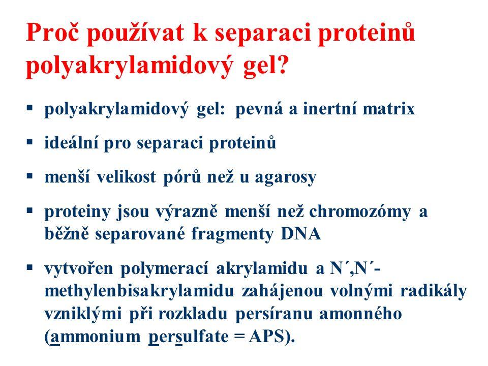 Proč používat k separaci proteinů polyakrylamidový gel