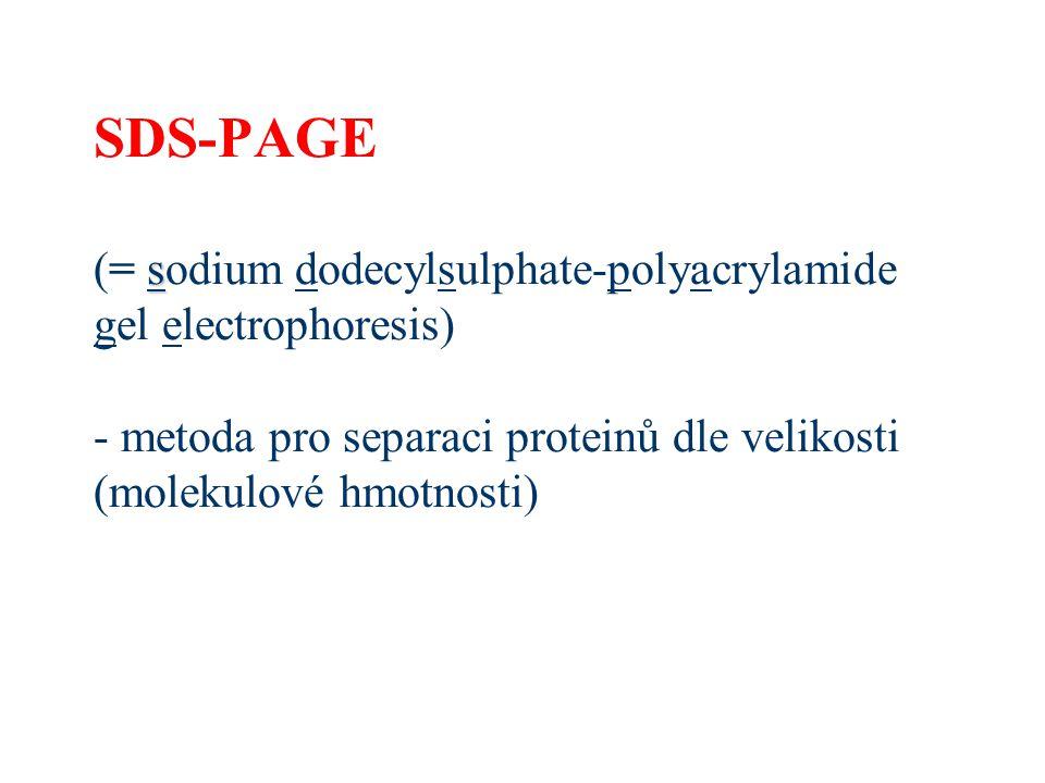 SDS-PAGE (= sodium dodecylsulphate-polyacrylamide gel electrophoresis) - metoda pro separaci proteinů dle velikosti (molekulové hmotnosti)