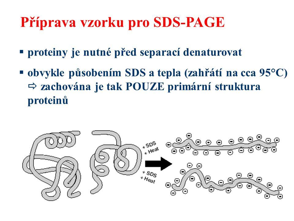 Příprava vzorku pro SDS-PAGE