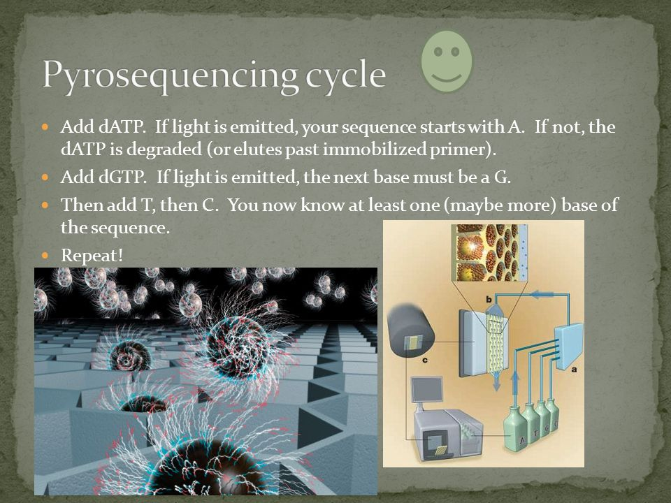 Pyrosequencing cycle Add dATP. If light is emitted, your sequence starts with A. If not, the dATP is degraded (or elutes past immobilized primer).