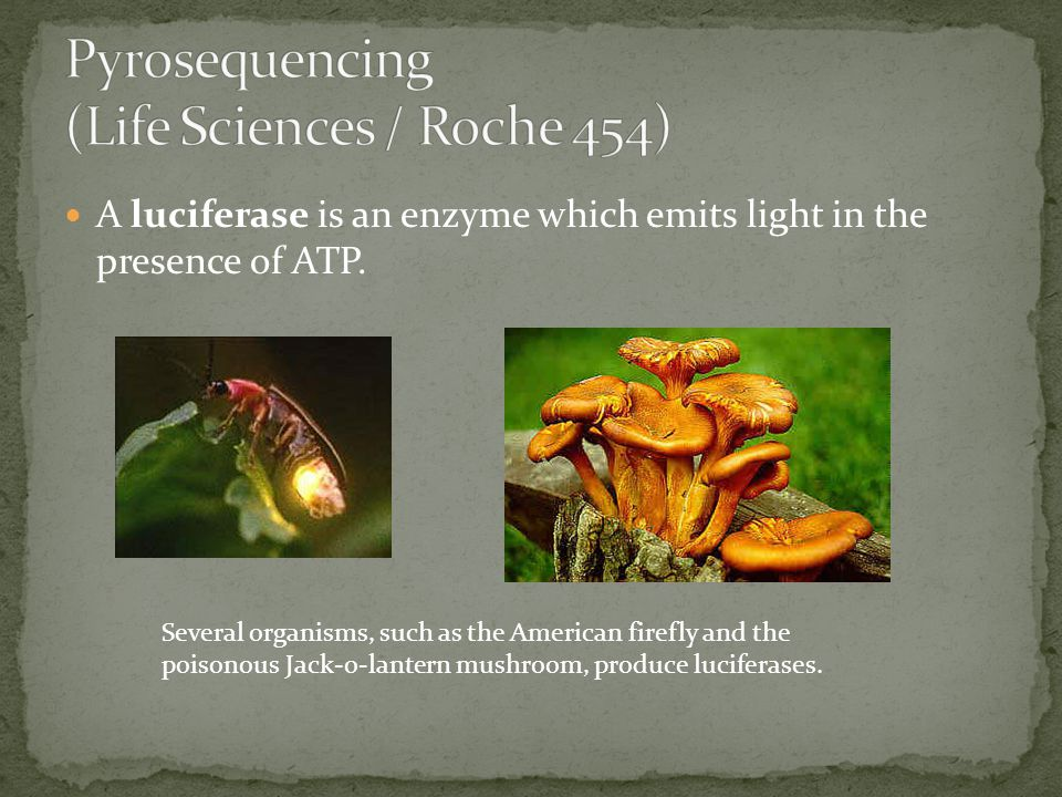 Pyrosequencing (Life Sciences / Roche 454)