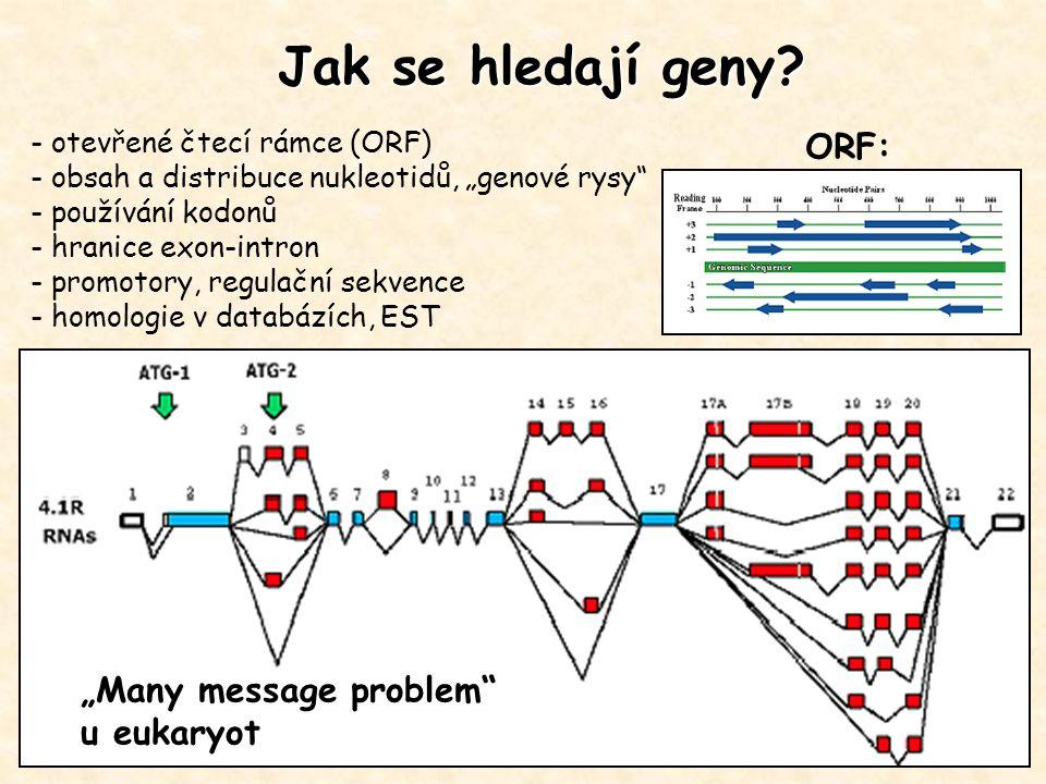 """Jak se hledají geny ORF: """"Many message problem u eukaryot"""