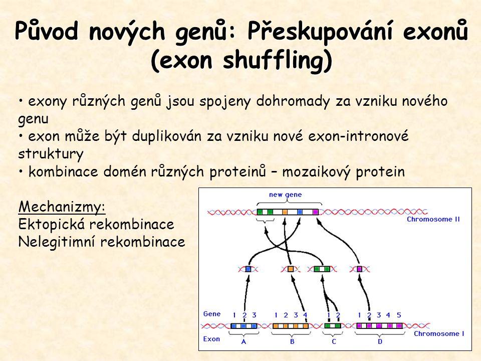 Původ nových genů: Přeskupování exonů