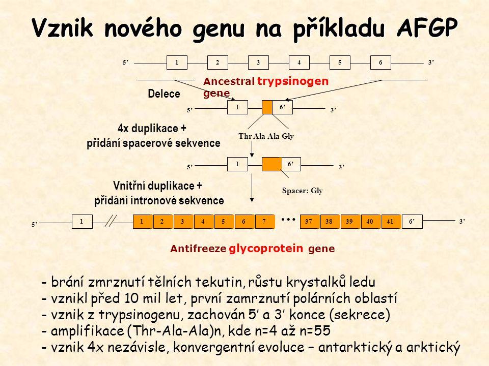 Vznik nového genu na příkladu AFGP