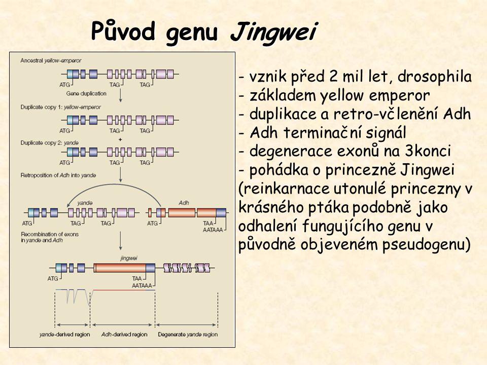 Původ genu Jingwei - vznik před 2 mil let, drosophila