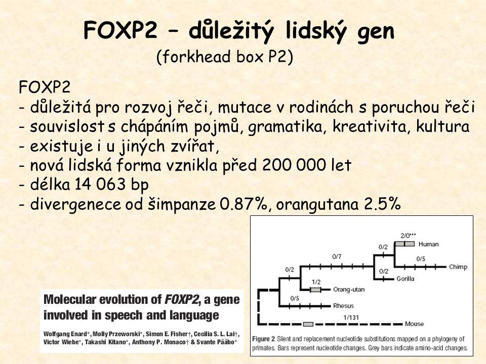 FOXP2 – důležitý lidský gen