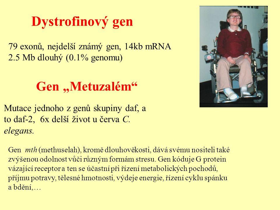 "Dystrofinový gen Gen ""Metuzalém"