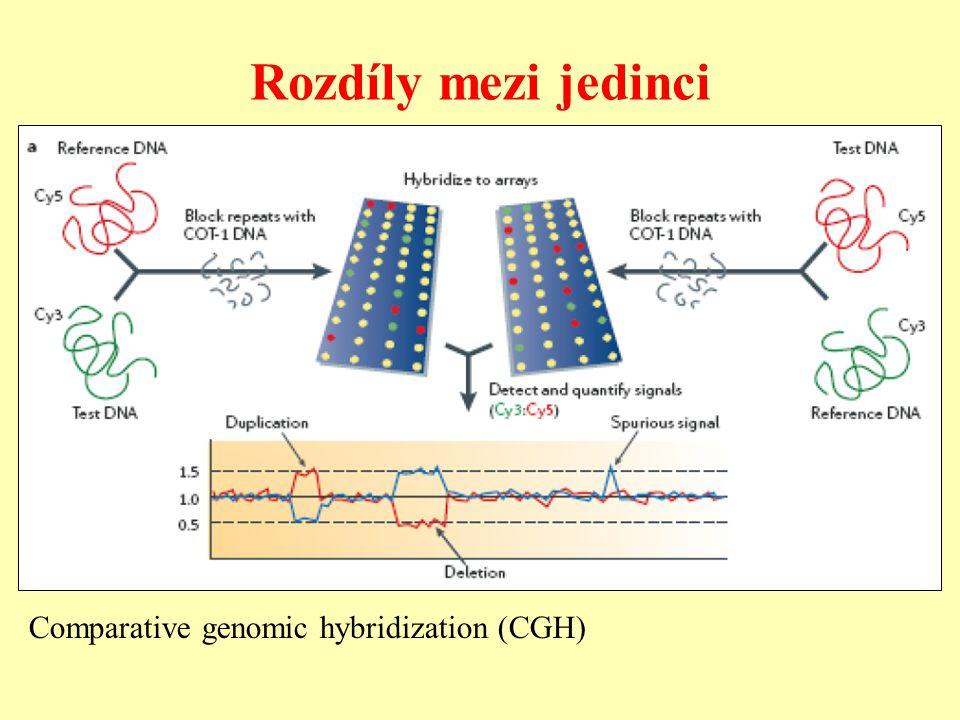 Rozdíly mezi jedinci Comparative genomic hybridization (CGH)