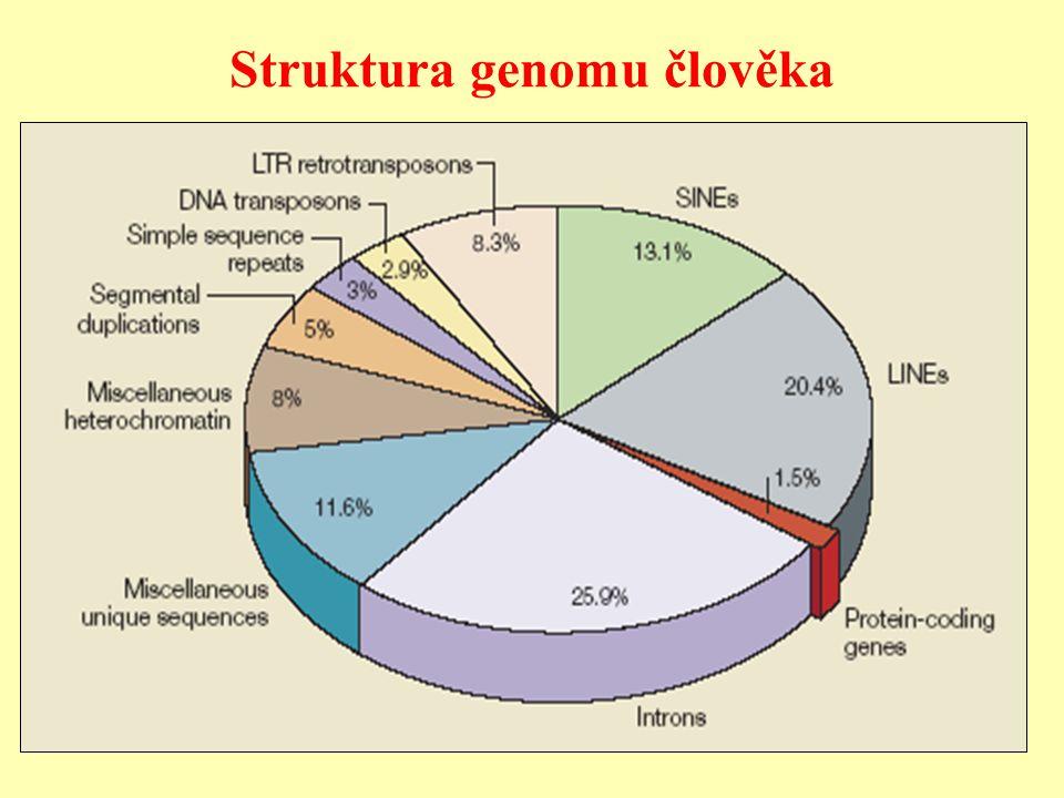 Struktura genomu člověka