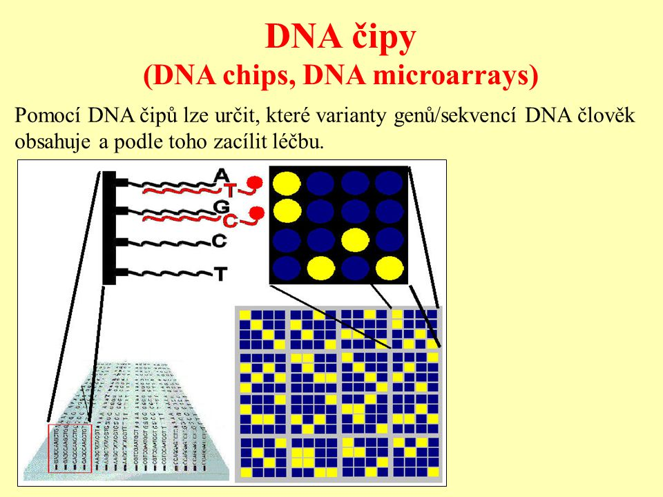 (DNA chips, DNA microarrays)