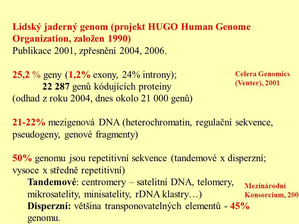 25,2 % geny (1,2% exony, 24% introny); 22 287 genů kódujících proteiny