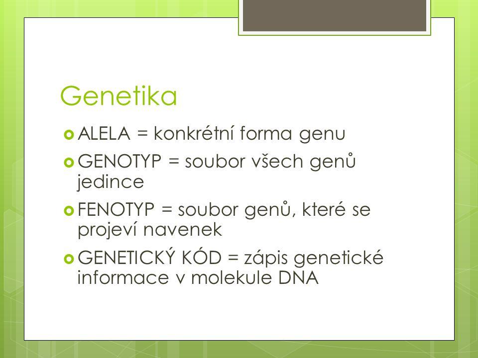 Genetika ALELA = konkrétní forma genu
