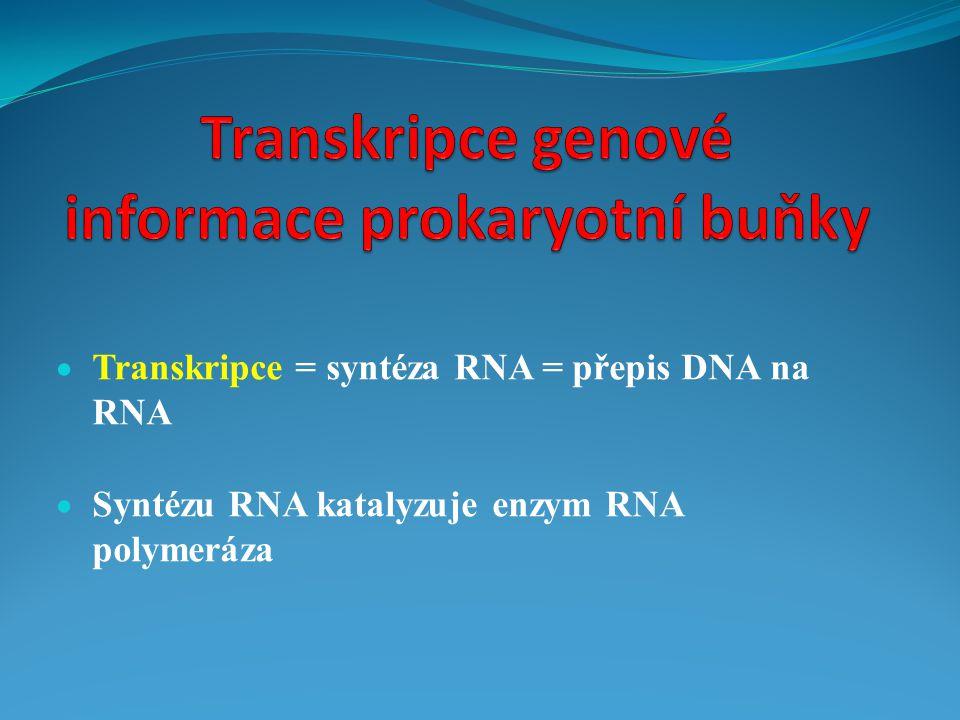 Transkripce genové informace prokaryotní buňky