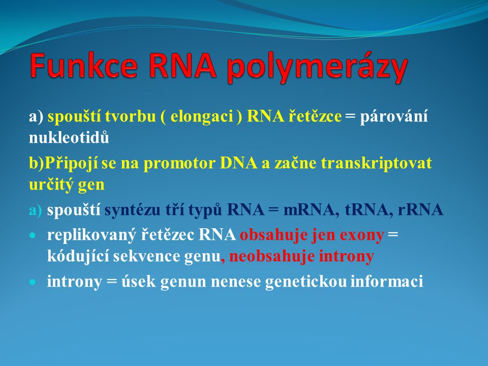 Funkce RNA polymerázy a) spouští tvorbu ( elongaci ) RNA řetězce = párování nukleotidů.