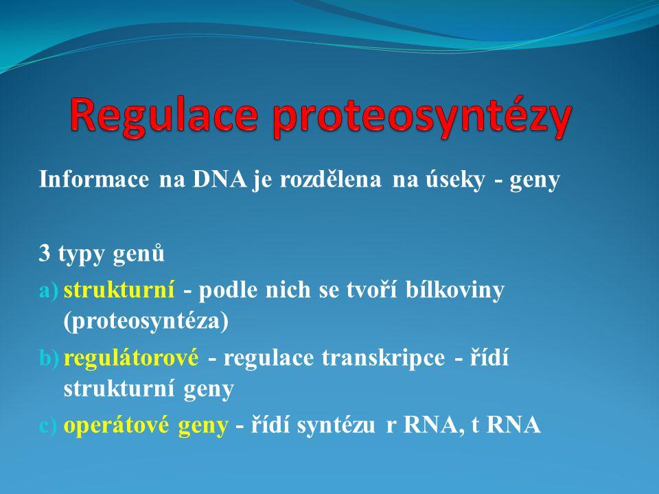 Regulace proteosyntézy