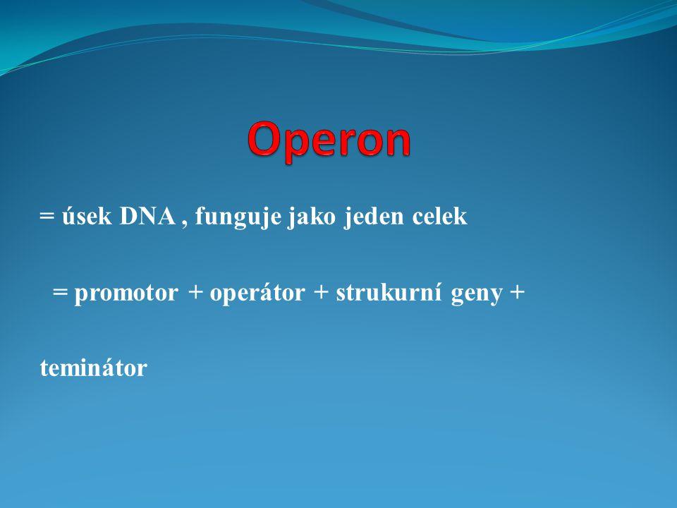 Operon = úsek DNA , funguje jako jeden celek