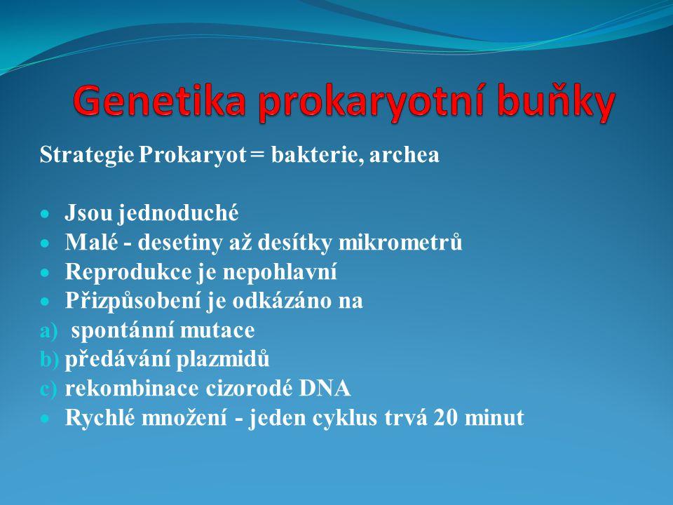Genetika prokaryotní buňky