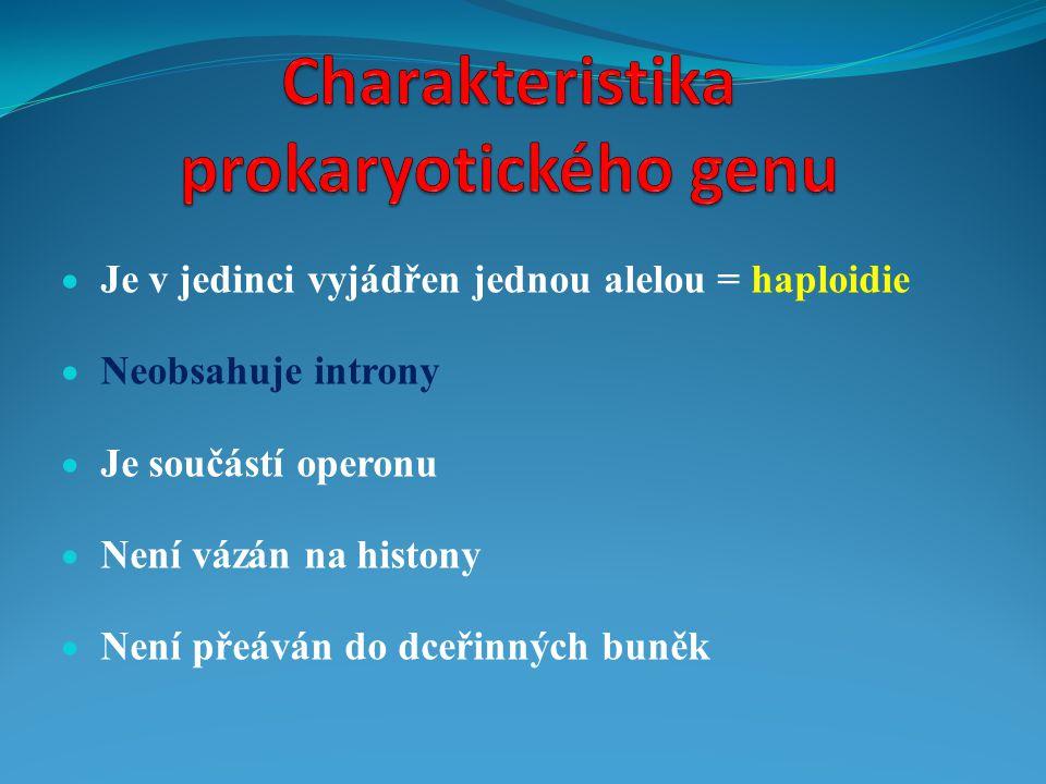 Charakteristika prokaryotického genu