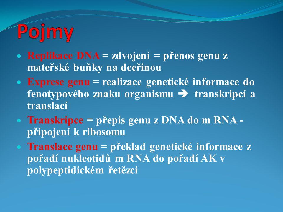 Pojmy Replikace DNA = zdvojení = přenos genu z mateřské buňky na dceřinou.
