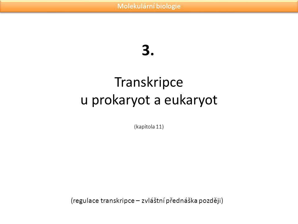 Transkripce u prokaryot a eukaryot (kapitola 11)