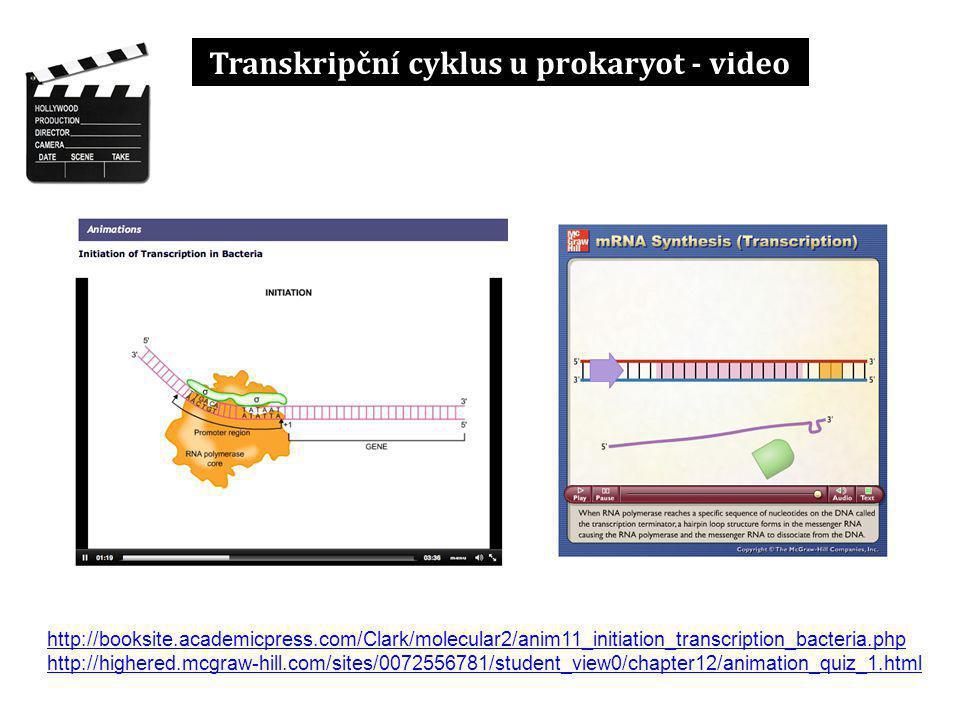 Transkripční cyklus u prokaryot - video