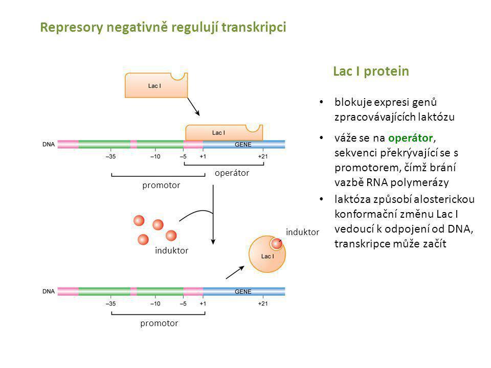 Represory negativně regulují transkripci