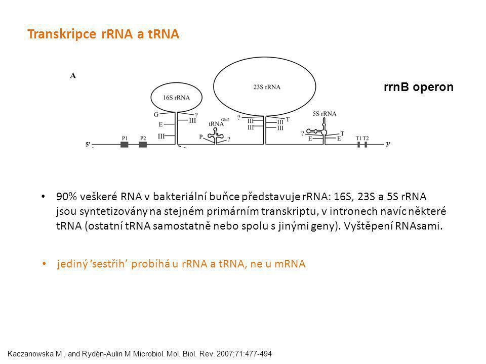 Transkripce rRNA a tRNA