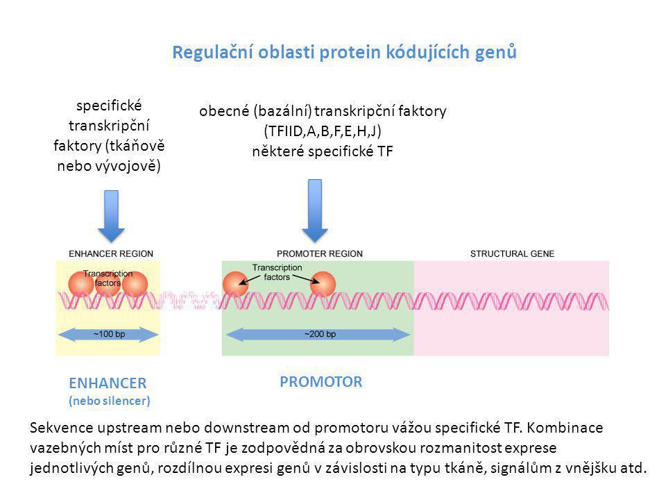 Regulační oblasti protein kódujících genů