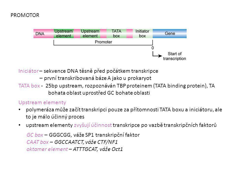 Iniciátor – sekvence DNA těsně před počátkem transkripce