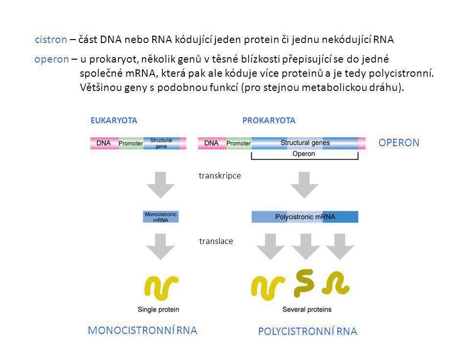 Většinou geny s podobnou funkcí (pro stejnou metabolickou dráhu).