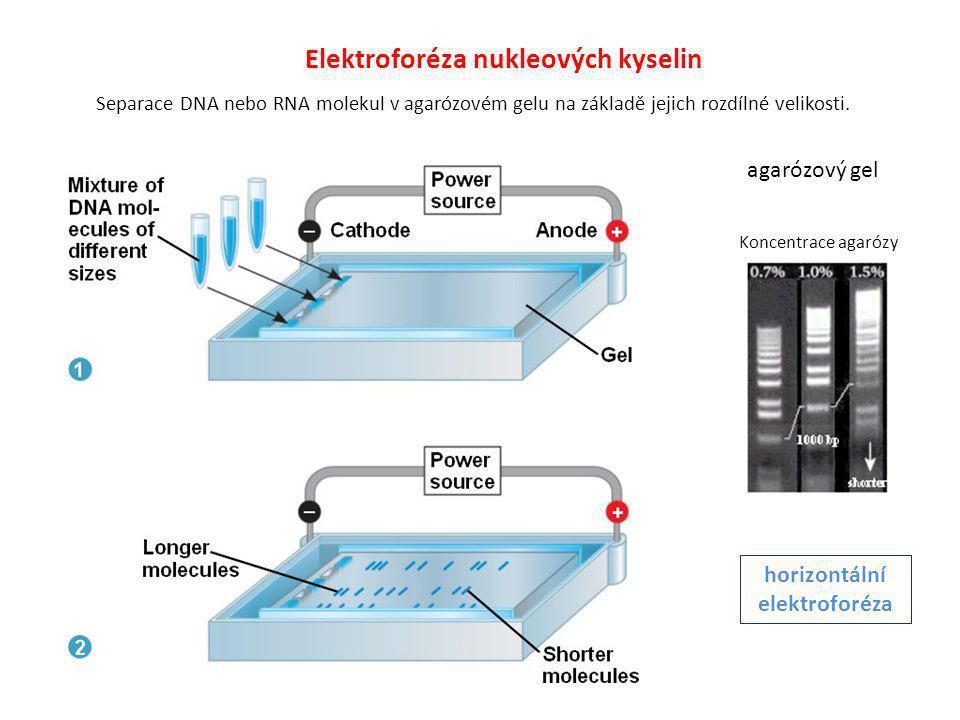 Elektroforéza nukleových kyselin horizontální elektroforéza