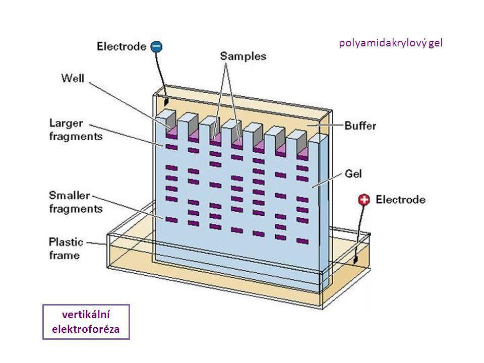 polyamidakrylový gel vertikální elektroforéza