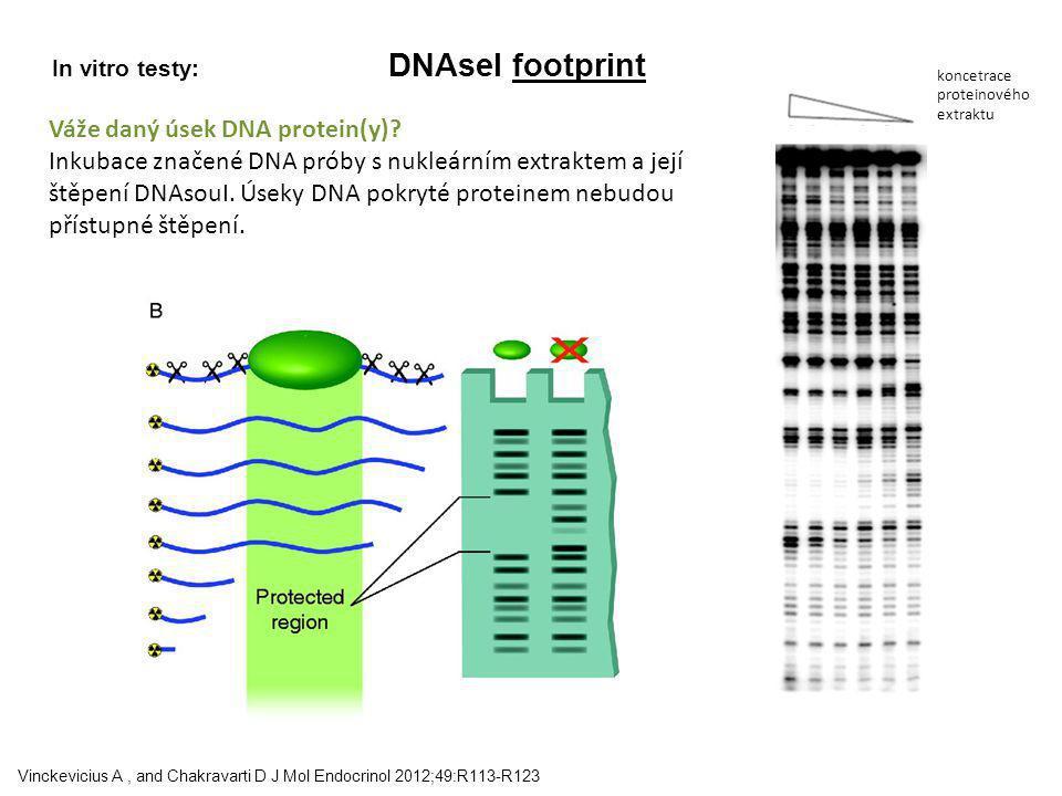 Váže daný úsek DNA protein(y)