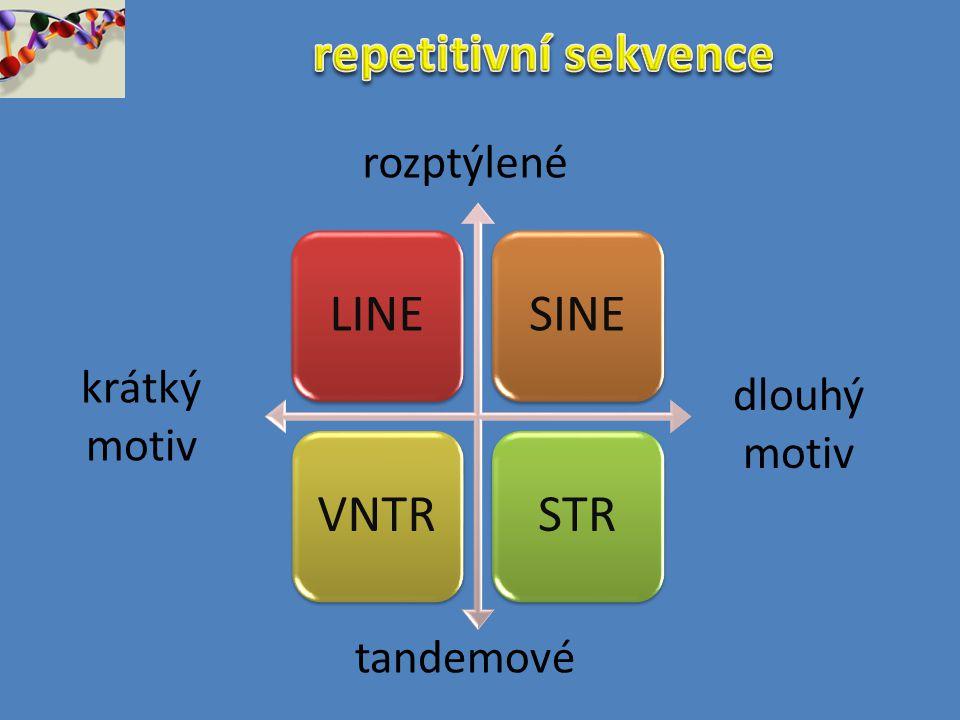 repetitivní sekvence rozptýlené krátký motiv dlouhý motiv tandemové