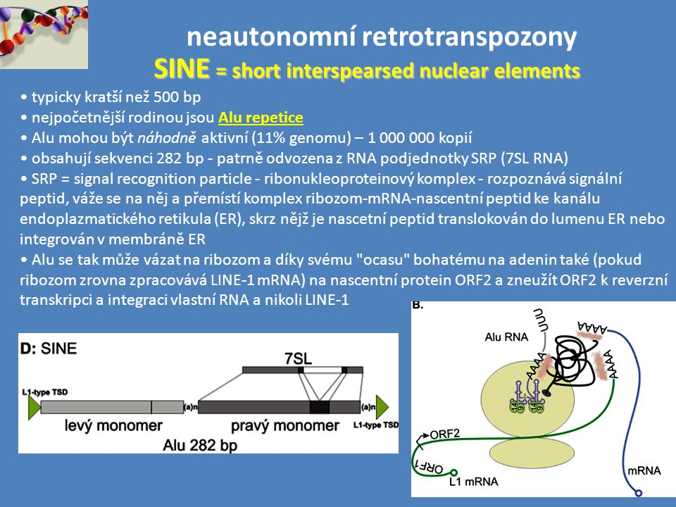neautonomní retrotranspozony