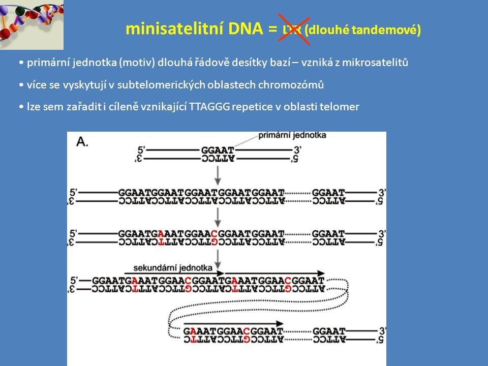 minisatelitní DNA = LTR (dlouhé tandemové)