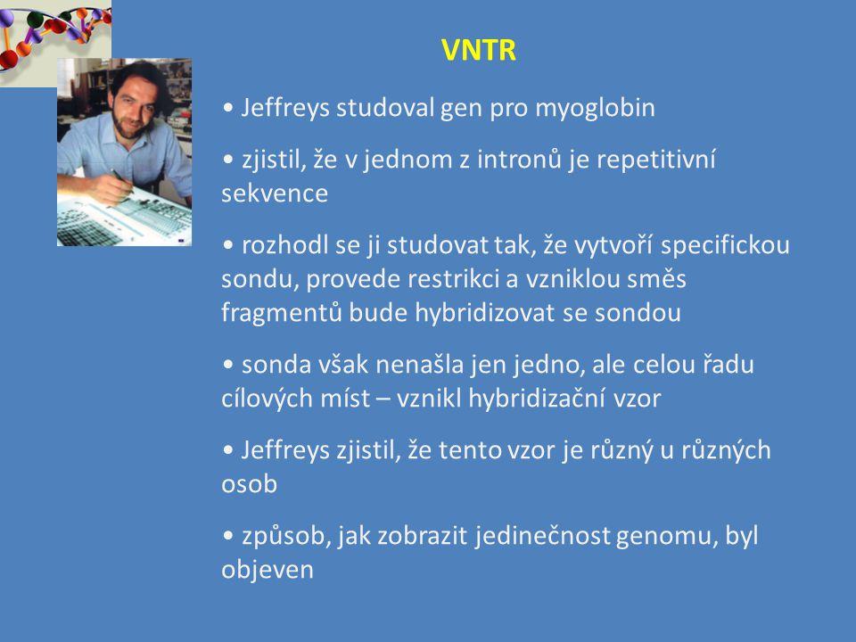 VNTR Jeffreys studoval gen pro myoglobin